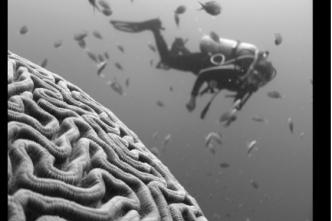 https://unsplash.com/search/photos/brain-sea foto di Vald Tchompalov